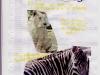 giornalino-04