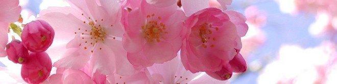 Concerto di Primavera: Coro dell'Oratorio Salesiano di Castel Gandolfo